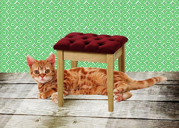 Katten / poezen: onder