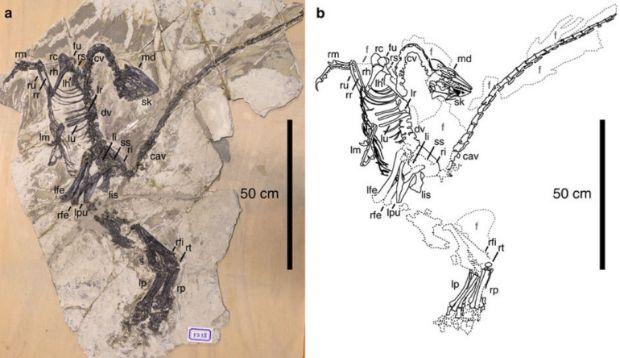 Los dinosaurios tenían plumas mucho antes de lo que creíamos | N+1: artículos científicos, noticias de ciencia, cosmos, gadgets, tecnología