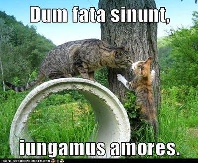 Dum fata sinunt, iungamus amores.    While the fates allow, let us join our love.
