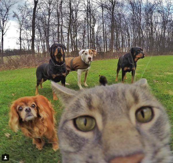 Селфи кот в Instagram - Картинки, приколы и смешные фото с животными