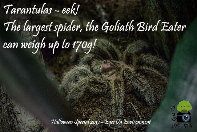 For more creepy, scary animals check out the Halloween special on YouTube! #halloween #youtube #video #vlog #blog #blogger #animals #spider #snakes #tarantulas