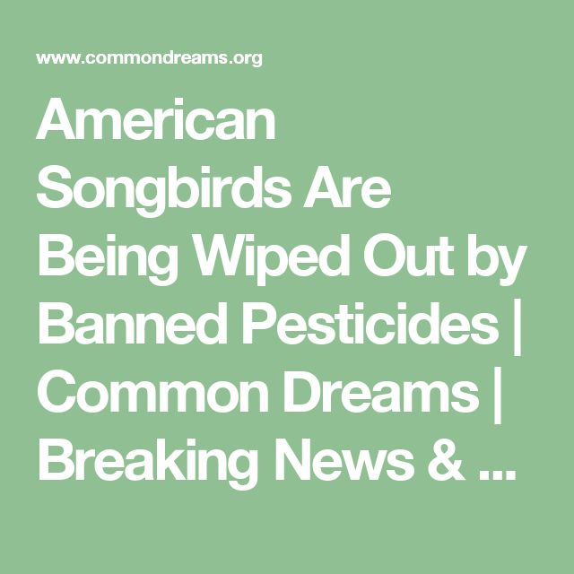 American Songbirds Are Being Wiped Out by Banned Pesticides | Common Dreams | Breaking News & Views for the Progressive Community