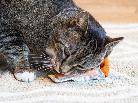 Asian Sauce Packet Cat Toys by Polydactyl Cats