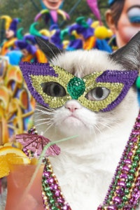 Grumpy Cat hates parties and mardis gras
