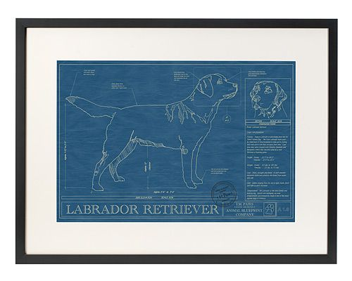 Either Great Dane or Shiba Inu for my parents...at UncommonGoods: dog blueprints... for $185 #uncommongoods