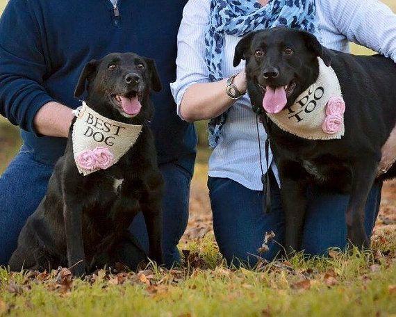 Meilleur mariage fille chien chien avec fleurs toile de jute Ivoire Bandana rustique fiançailles enregistrer la Date de photographie
