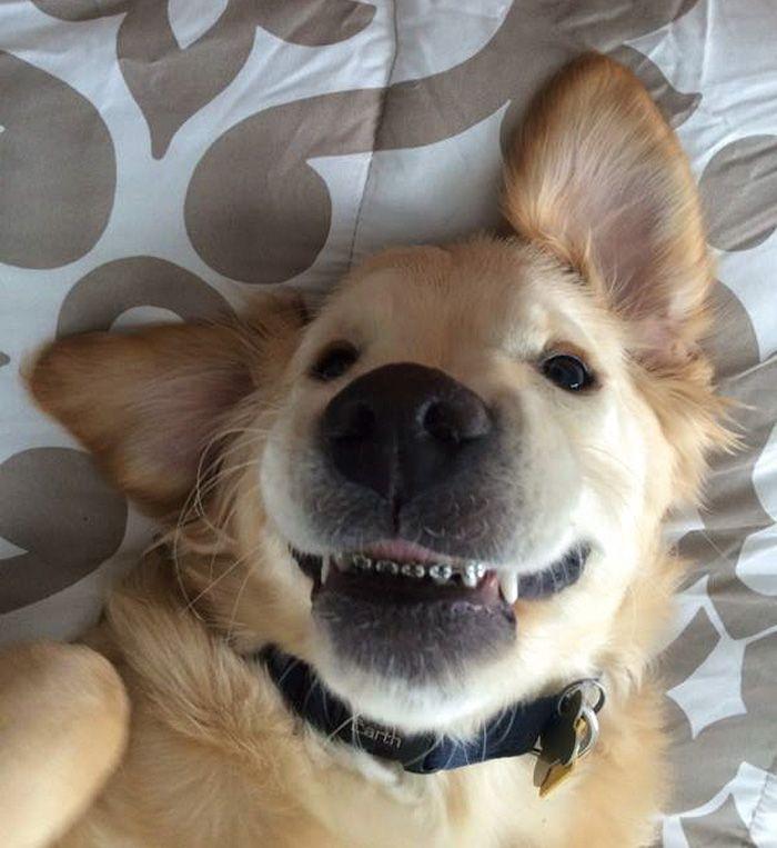 Este Cão Não Conseguia Fechar A Boca, A Solução Foi Usar Aparelho