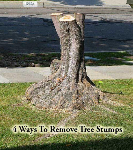 4 Ways To Remove Tree Stumps