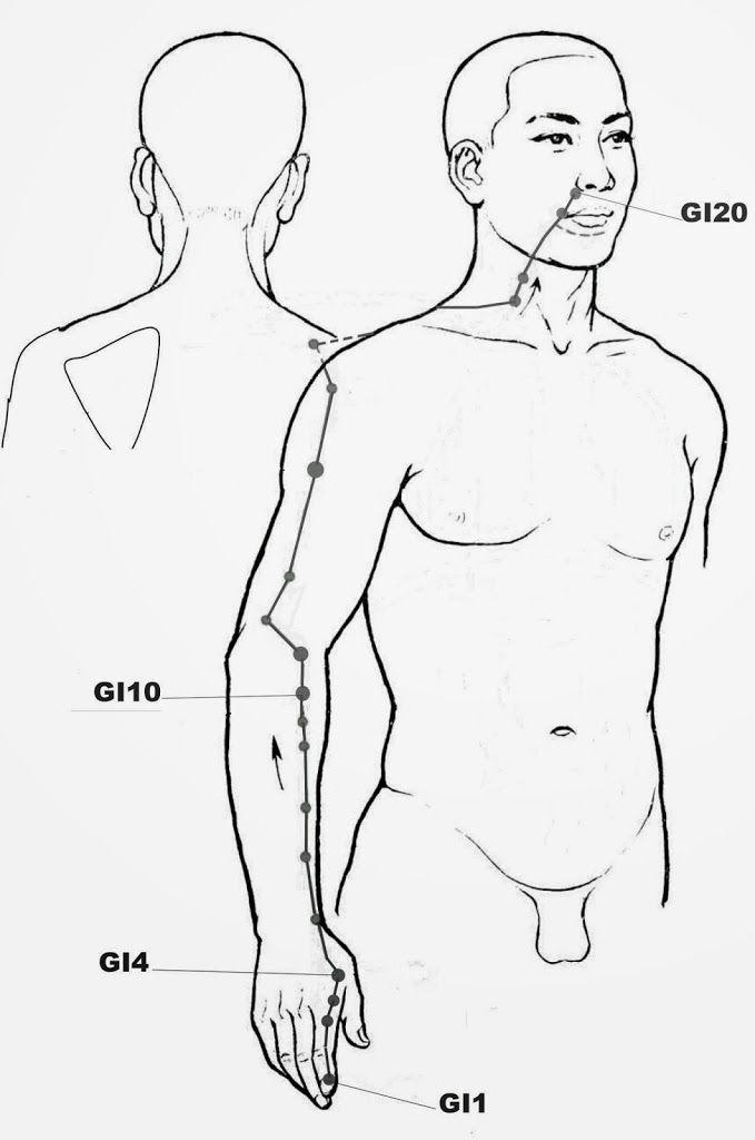 Description du Méridien du Gros Intestin: planche du trajet complet du méridien et localisation des points d'acupression principaux.