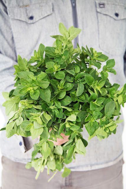 Oregano for health, diet and detox. 1/2 teaspoon has the same amount of antioxidants as a quarter cup of almonds and four times the antioxidant activity of blueberries. Try adding to soups, sauces and salads.