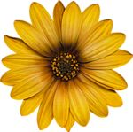 TBorges_InFlowers_flower4 (3).png