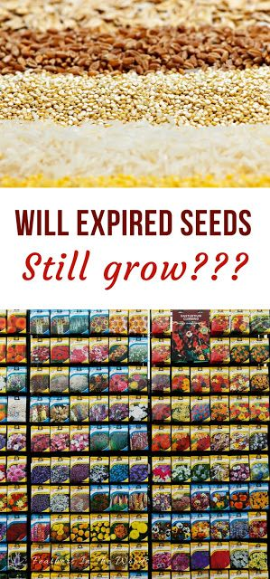 Will expired seeds grow? If seeds have last years date on them are they still viable, or do I have to buy more?