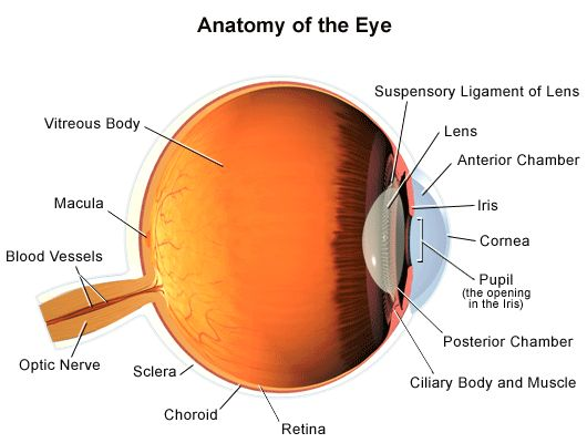 Eye surface anatomy