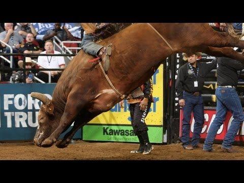 TOP BULL SCORE: Bushwacker (PBR)--- Bushwacker bucks off Ben Jones in 2.04 seconds and receives a bull score of 48.25 points in the Championship round of the 2013 PBR Bass Pro Chute Out in Louisville, Ky.