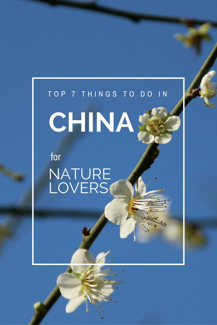 """Though better known for its history and culture, China also has an endless array of stunning natural attractions. Check out the Top 7 Things to Do in China for Nature Lovers, including exploring Jiuzhaigou Valley, visiting the Sichuan Giant Panda Sanctuaries, seeing the """"Avatar Mountains"""" of Zhangjiajie National Forest Park & more! What to do in China 