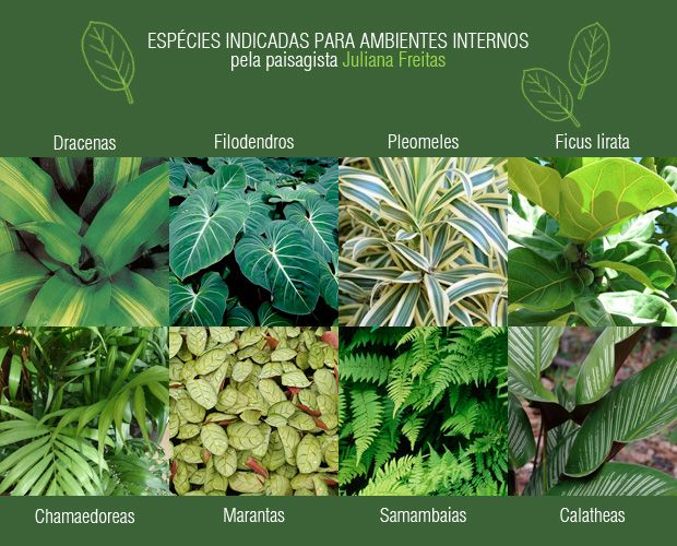 Plantas para interior                                                                                                                                                                                 Mais