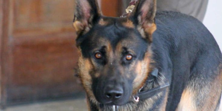 When police officer Ryan Davis lost his partner, Jethro, in the line of duty, it left a huge hole; his partner also doubled as the beloved family dog. The city of Canton, Ohio, tried its best to fill that hole this week, and Steve Hartman was there.