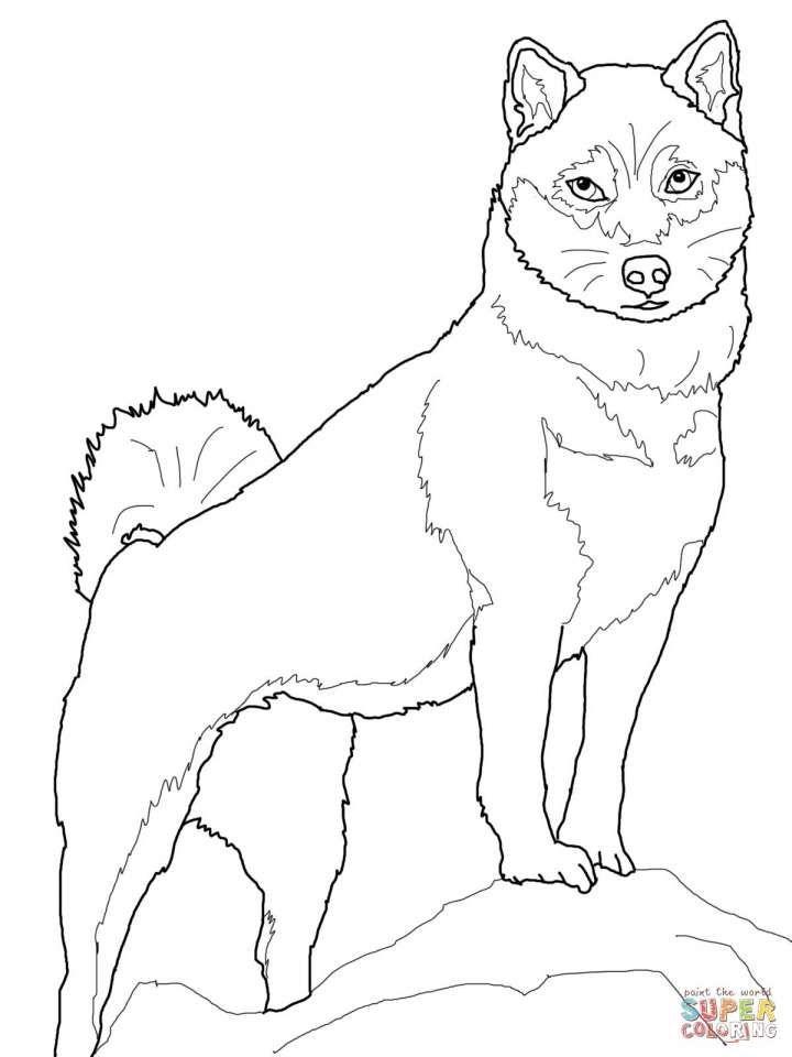 10 Shiba Inu Coloring Page Dog Coloring Book Shiba Inu Shiba