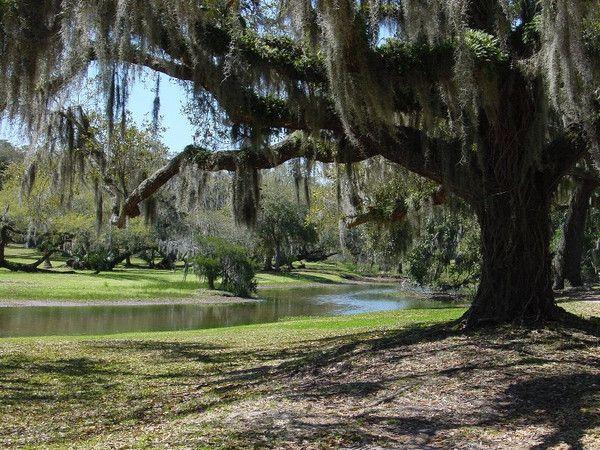 Louisiana Scenery Louisiana landscape | ...
