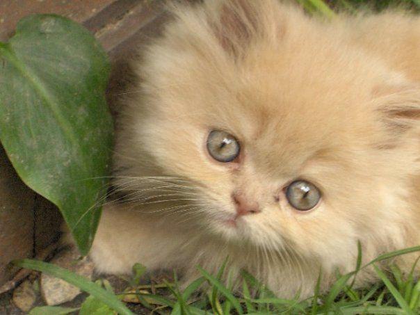 Fotos De Gatos Bonitos   Hermosos Gatos Machos