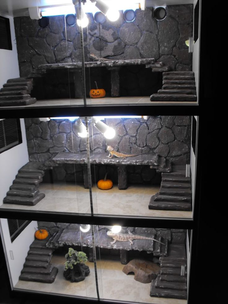 Don't forget about the bearded dragon cage when you're picking up pumpkins! They're great enrichment items.
