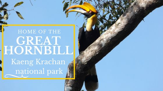 The largest national park in Thailand, Kaeng Krachan national park is in the south of Thailand, where it borders Myanmar/Burma. It's particularly well-known as a birding destination. Inspired by our trips to Khao Yai...
