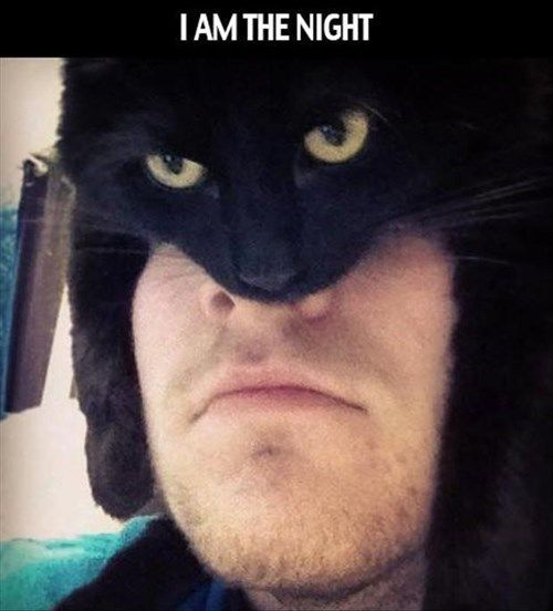 Batcat. Why does batman related humor make me laugh so hard?!