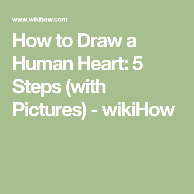 how to draw a human heart diagram step by step