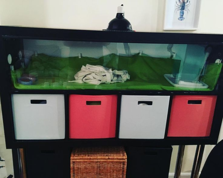 Custom built hedgehog cage! Can be used for other small ...