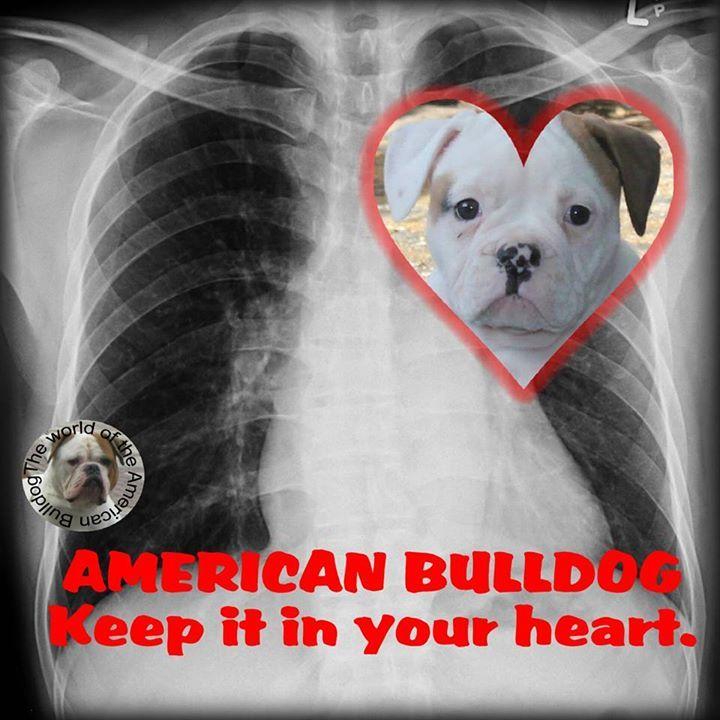 The breed has stolen my heart.