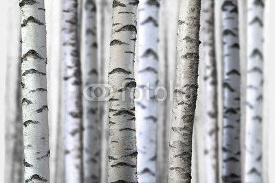 seamless birch trees