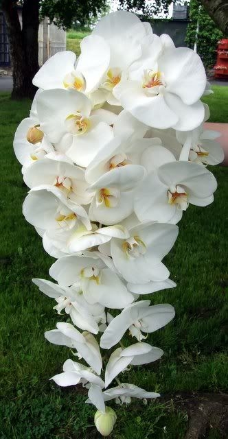 My hanging white orchid bouquet