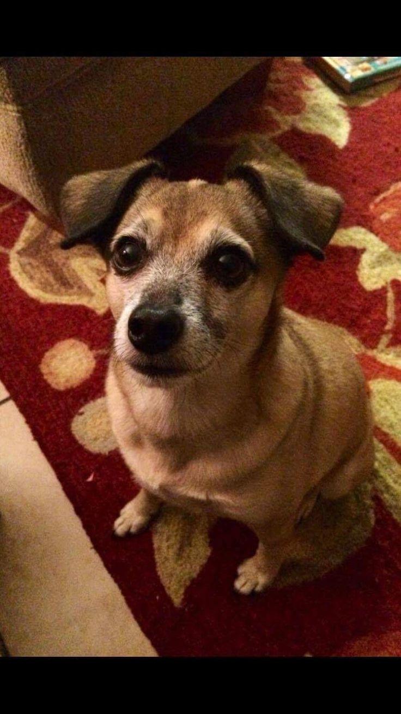 17 Terbaik Ide Tentang Chug Dog Di Pinterest Anak Anjing Pug