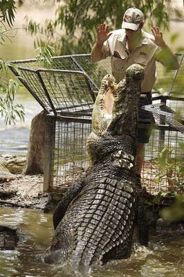 Hartley's Crocodile Adventures - Tourism Port Douglas And Daintree