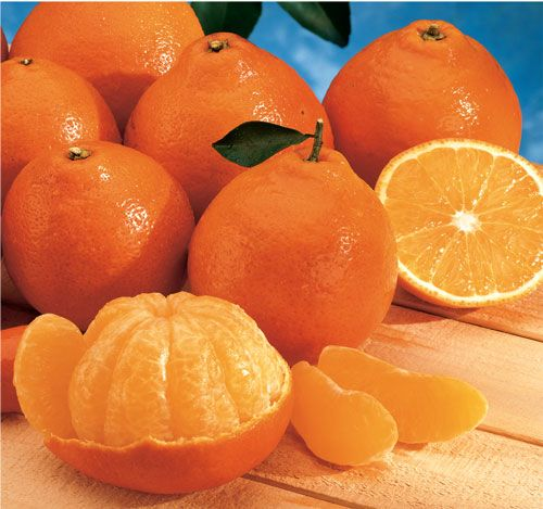 Honeybell oranges are in season now and a rare treat if you can find them, usually right after Christmas - sweet, very juicy, and easy to peel.