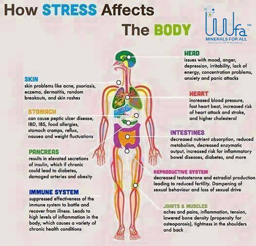 how stress affects human behavior