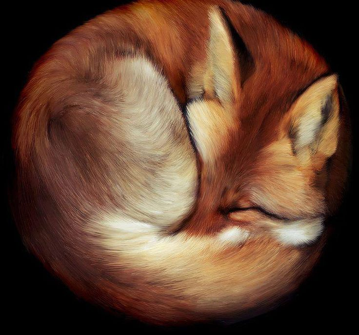 Slightly obsessed with getting a pet fox..