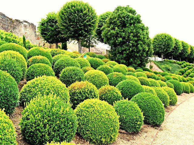 France, Loire Valley - Château d'Amboise III (The Gardens)