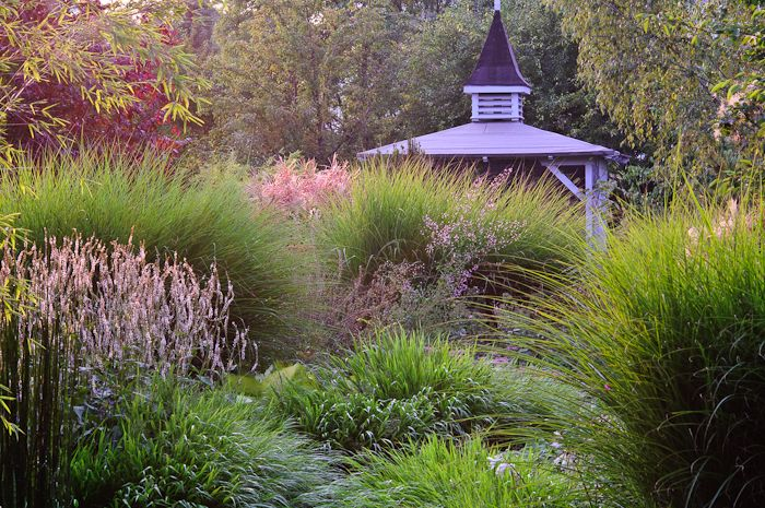 172 best ideas about grasess in the garden on for Grasses planting scheme