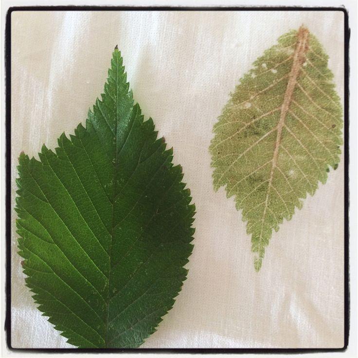 Leaf and print