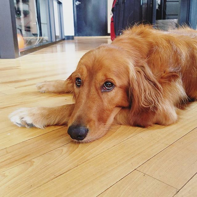 How could you resist not bringing your dog to WeWork offices? From @cherylkiwi #dogsofWeWork