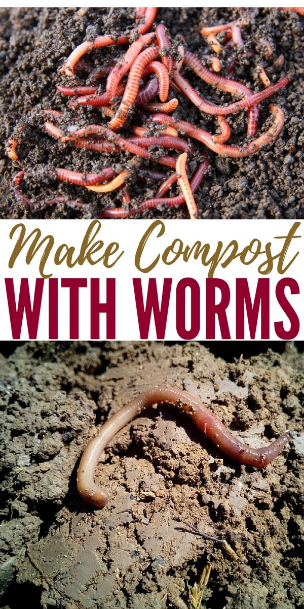 Make Compost with Worms