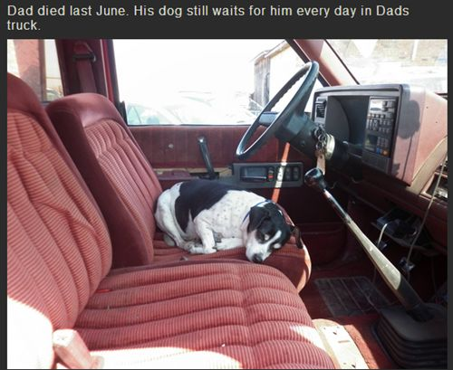Internet Sad Story: Dad died last June. His dog still waits for him every day in Dads truck.