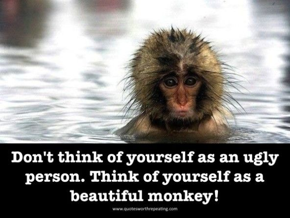 funny monkey pictures with sayings 1 300x225