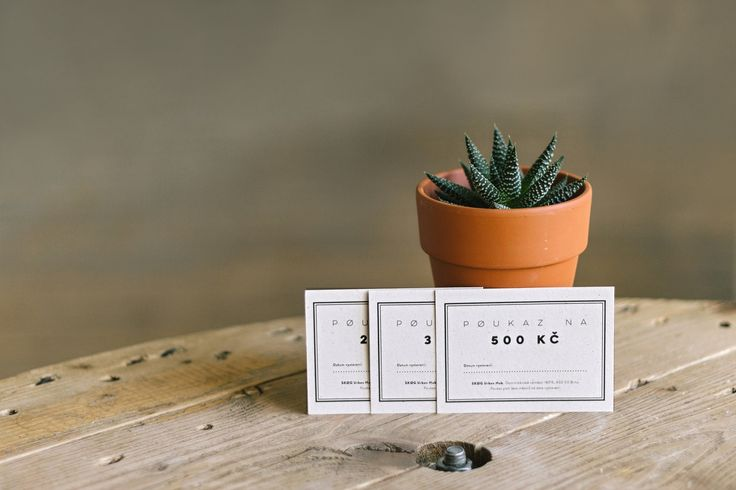 succulent | plant | decoration | voucher | cafe | SKØG Urban Hub | Brno