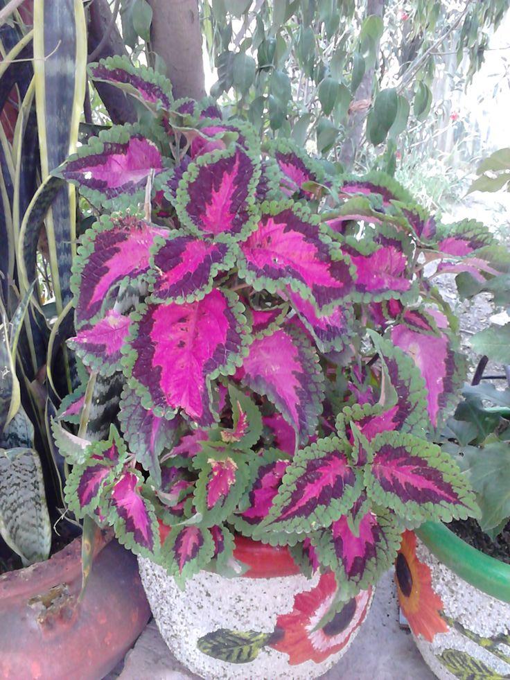 Capa De Rey Flores Y Plantas Exoticas Plants Y Garden