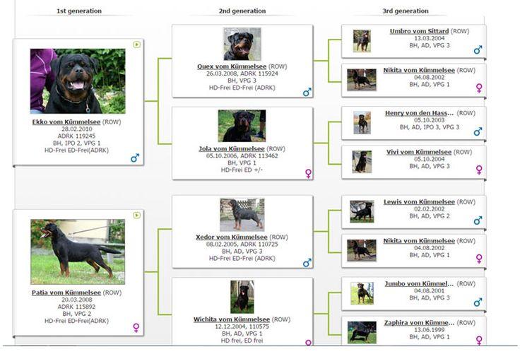 Filhotes de Rottweiler - Canil Von Norden especializado na criação de Rottweiler, filhote de rottweiler, cão da raça rottweiler, filhotes, filhotes à venda, criador, criadores, canil Rottweiler, cães de guarda, cão de guarda, filhotes, filhotes