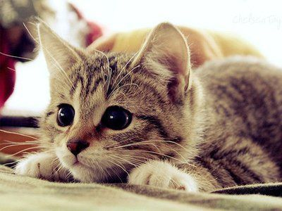 Cute Cats for Your Sunday | 17 Pics