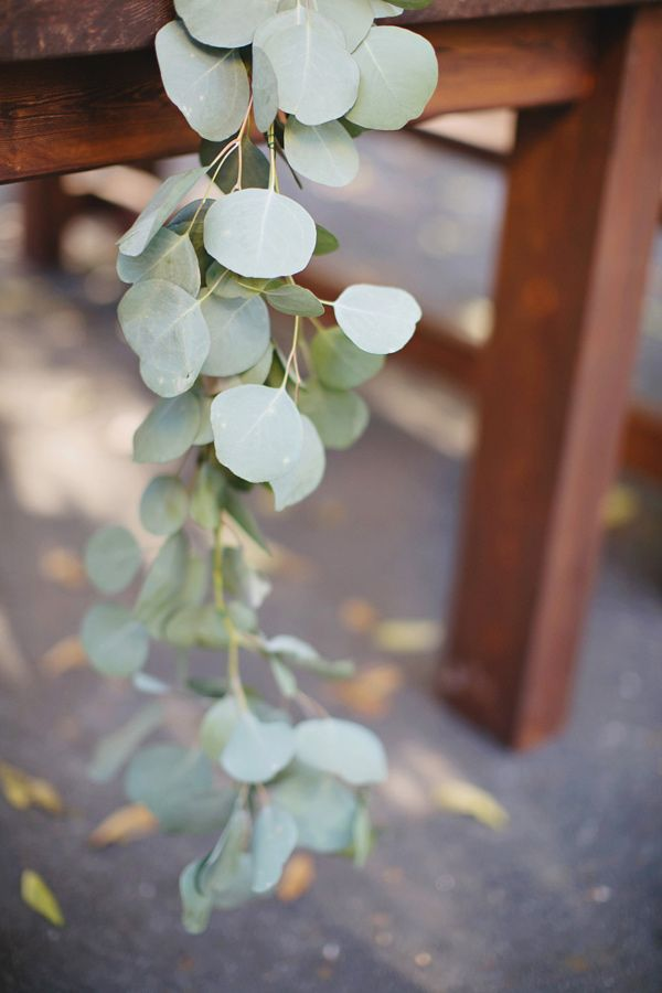 eucalyptus table runner. There's different types of eucalyptus. Some resemble olive branches more @stefalotico