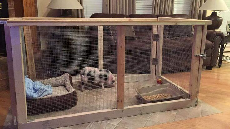 Mini Pig Indoor Housing. This would definitely be good for Lily!!